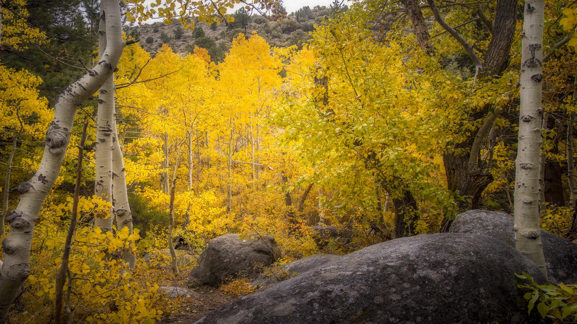 Rock Creek Fall Color9