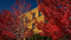 Truckee Fall Color2