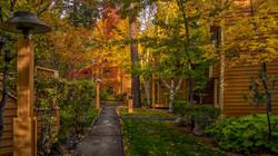 Incline Village Fall Color10
