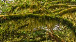 Rain Forest11