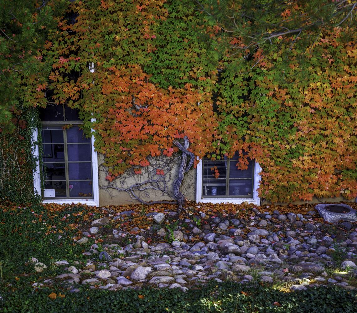 Autumn Vine Wall4