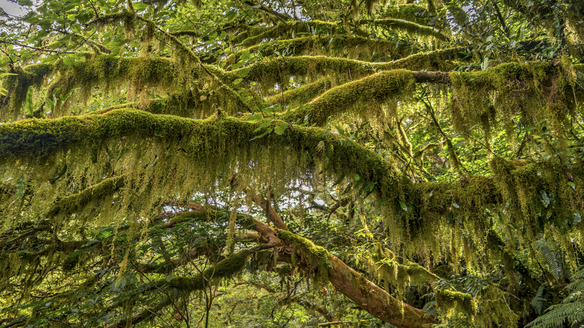 Rain Forest12