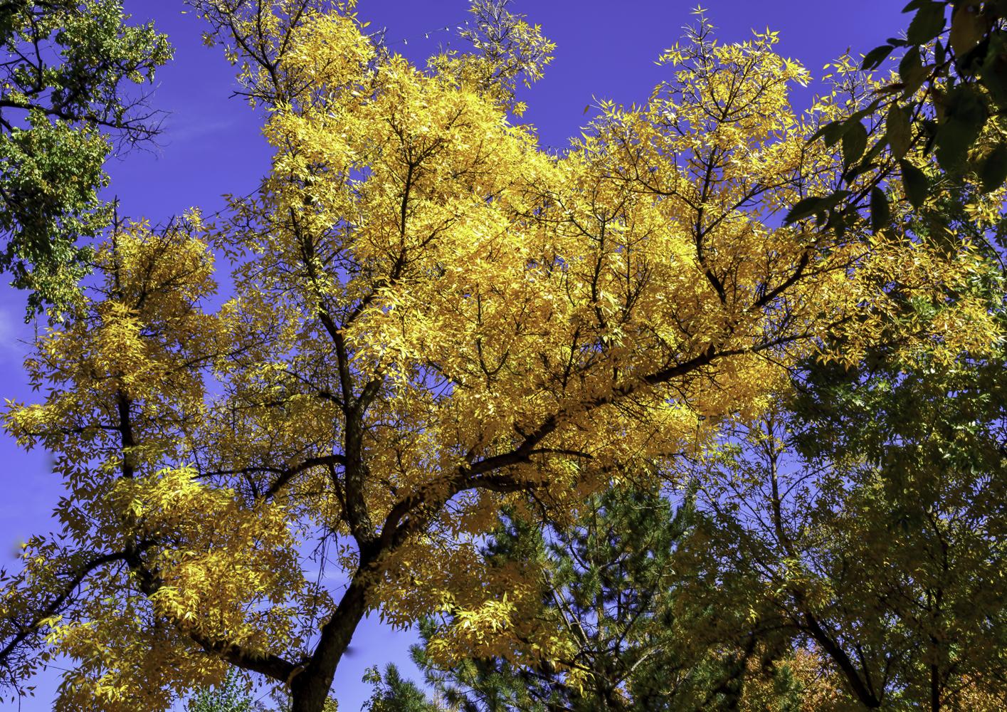 Autumn in Santa Fe2