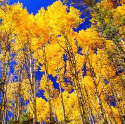 Autumn in Taos5