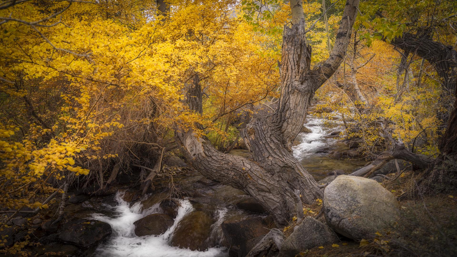 Rock Creek Fall Color8