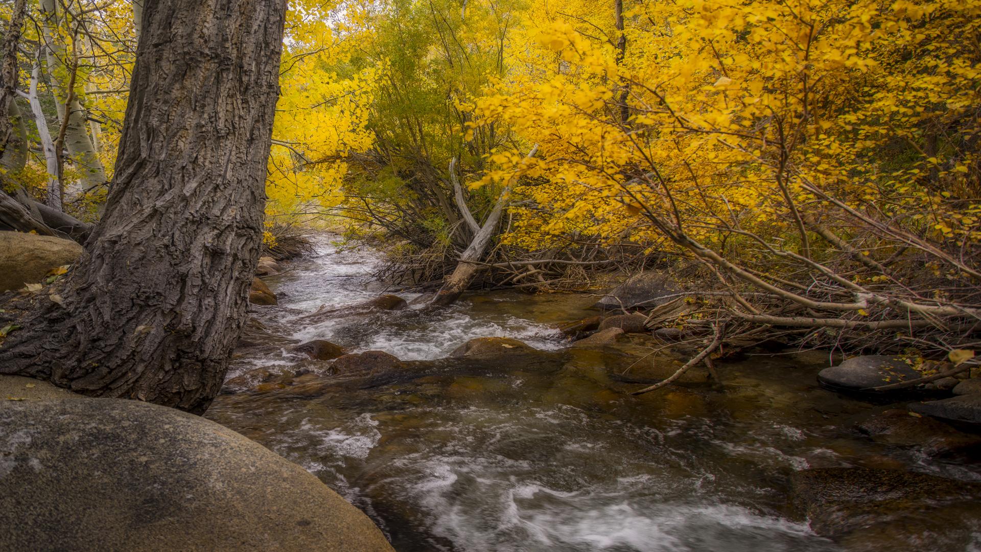 Rock Creek Fall Color18