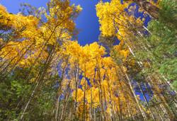 Autumn in Taos6