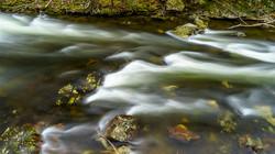 Laurel Creek9a