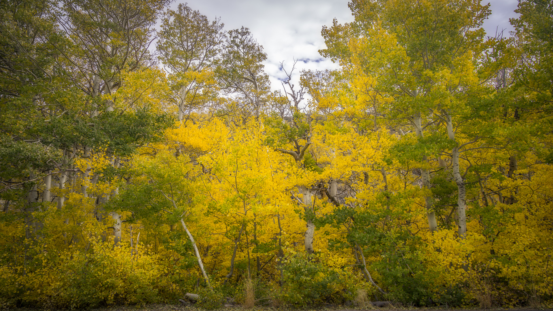 Rock Creek Fall Color21
