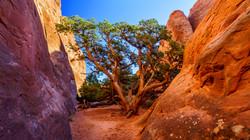 Tree Walls, Arches Nat'l Park