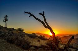 Sunset Joshua Tree2 10-3-16