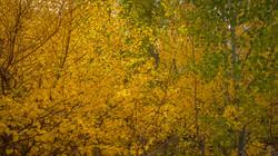 Rock Creek Fall Color16