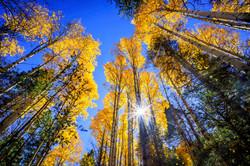 Autumn in Taos3