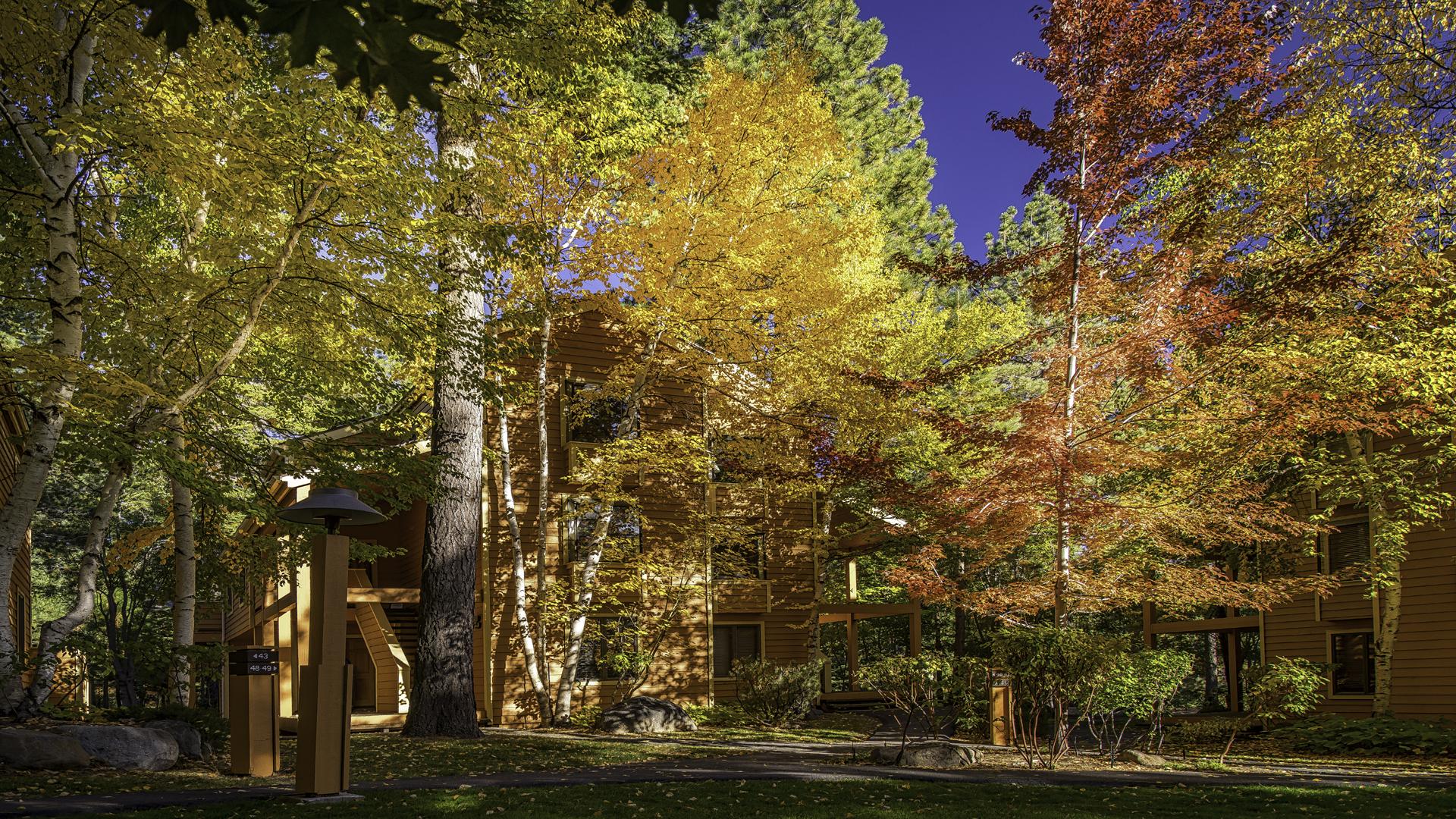 Incline Village Fall Color4