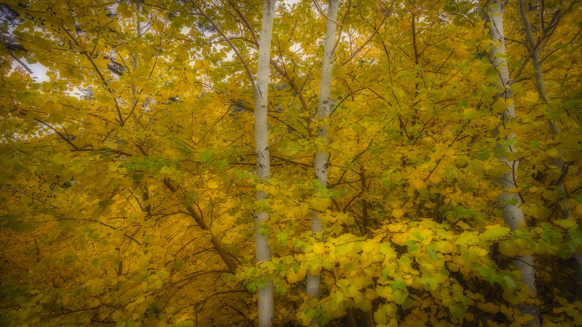 Rock Creek Fall Color12