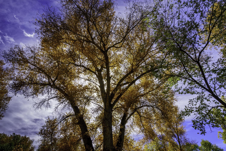 Autumn in Santa Fe1