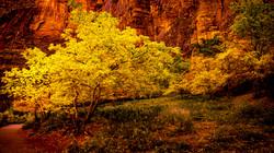 Valley Color1