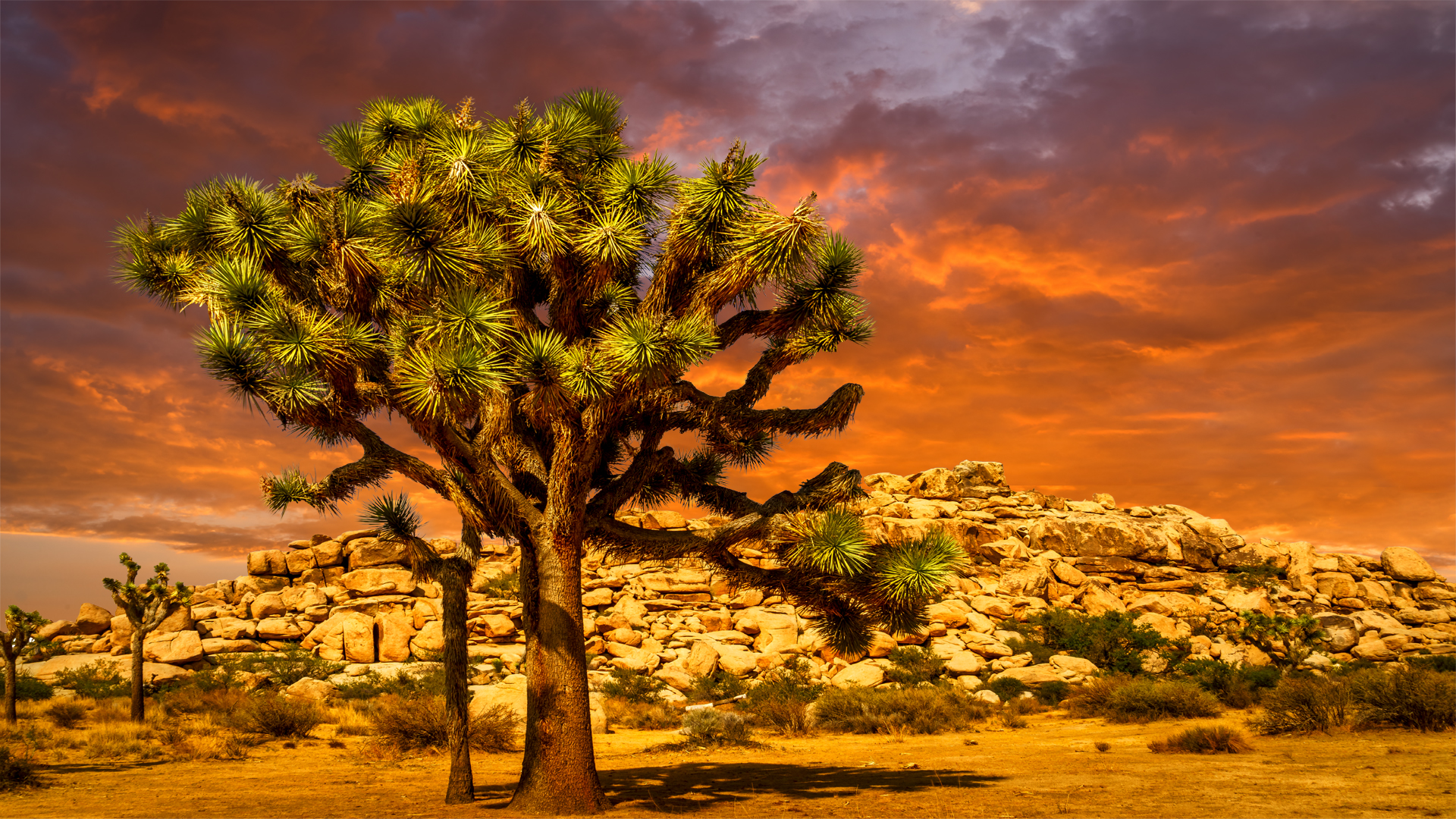 JoshuaTree Sunset2