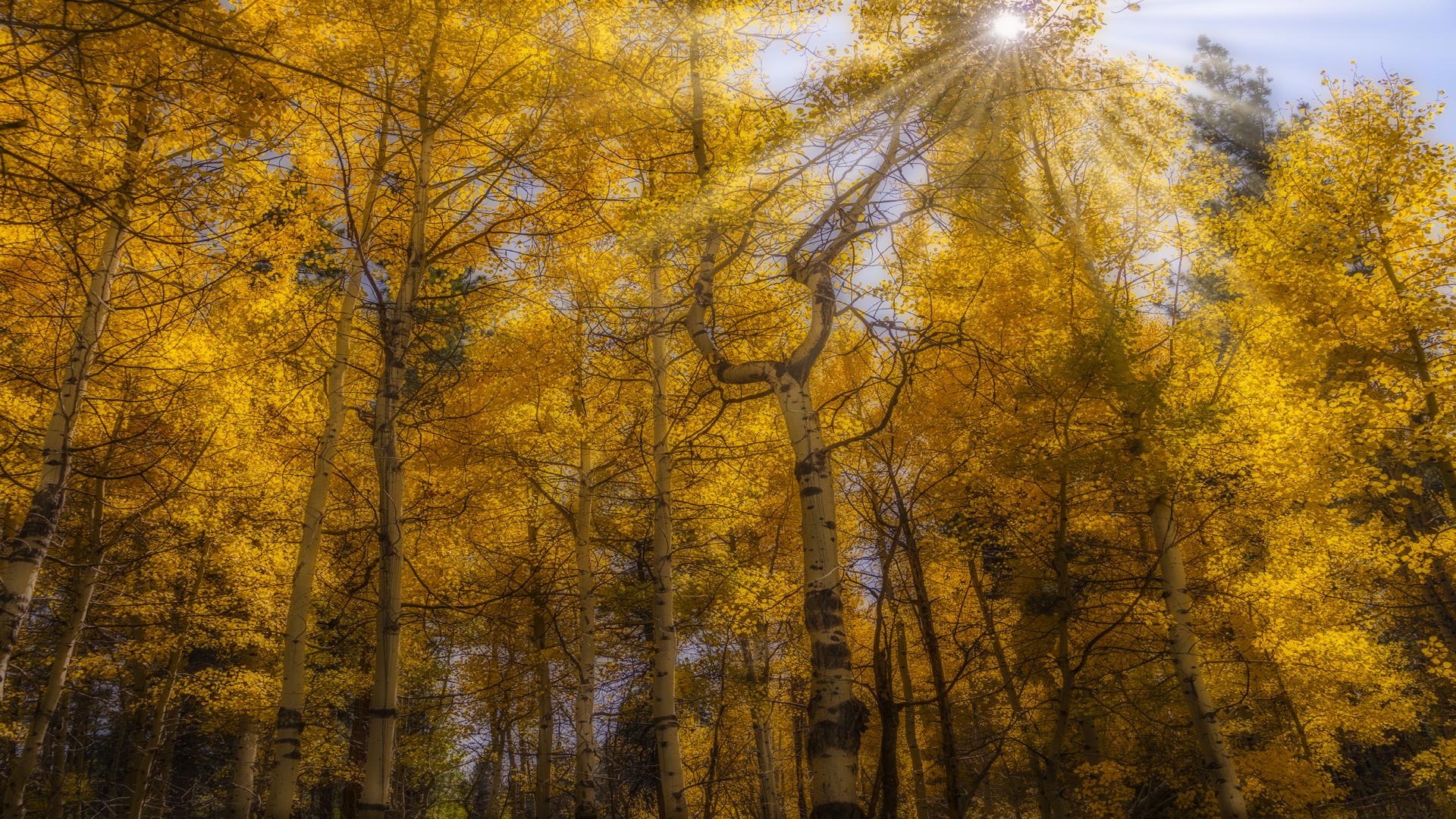 Fallen Leaf Lake Fall Color1