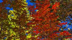 Incline Village Fall Color7
