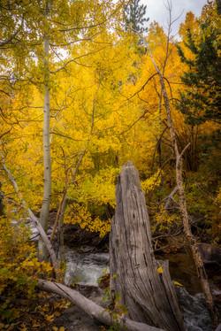 Rock Creek Fall Color20