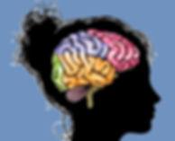 Cerveau adolescente.jpg