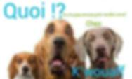 K'wouaff, toilettage chiens et gardes d'animaux à Ans Rocourt