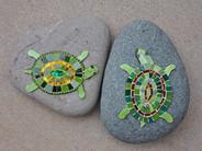 Turtelschildkröten