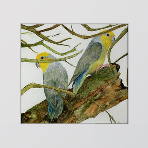 Yellow Faced Parakeets
