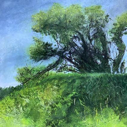 Tree At Mount Boon Farm