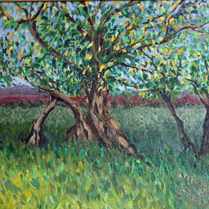 Trees in Provence