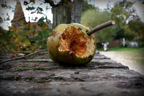 rotten apple II