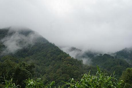 Cloud forest near Chiang Mai, Thailand
