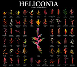 A botanical gift