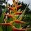 Thumbnail: Heliconia psittacorum hyb. 'Nickeriensis'