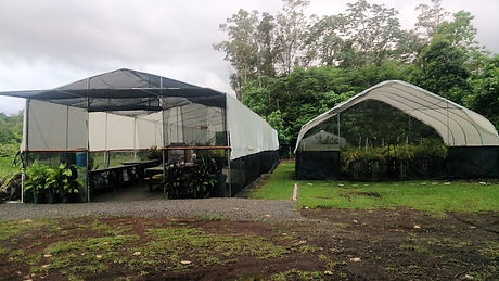 PGH Greenhouses in Hilo