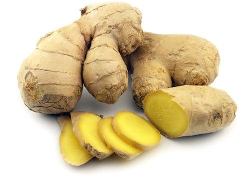 Zingiber officinale 'Edible ginger'