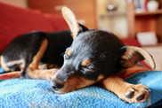 puppy-1977171_1920.jpg