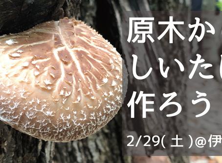 子連れ歓迎!原木からしいたけを作るイベントを開催します!