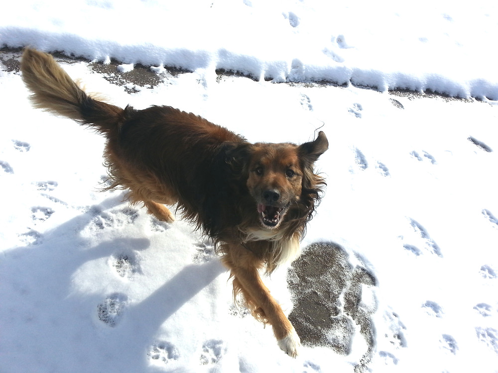 Author Connie Lacy's dog