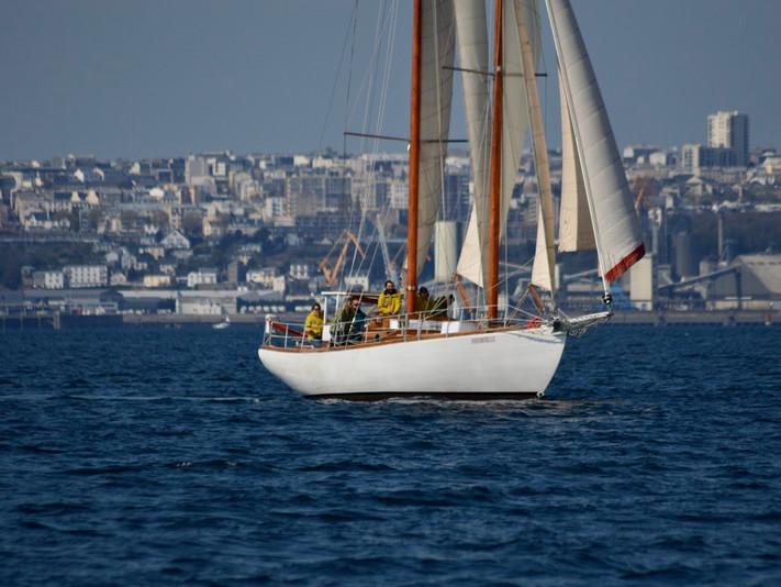hirondelle_brest_louiseras_sailinghirond