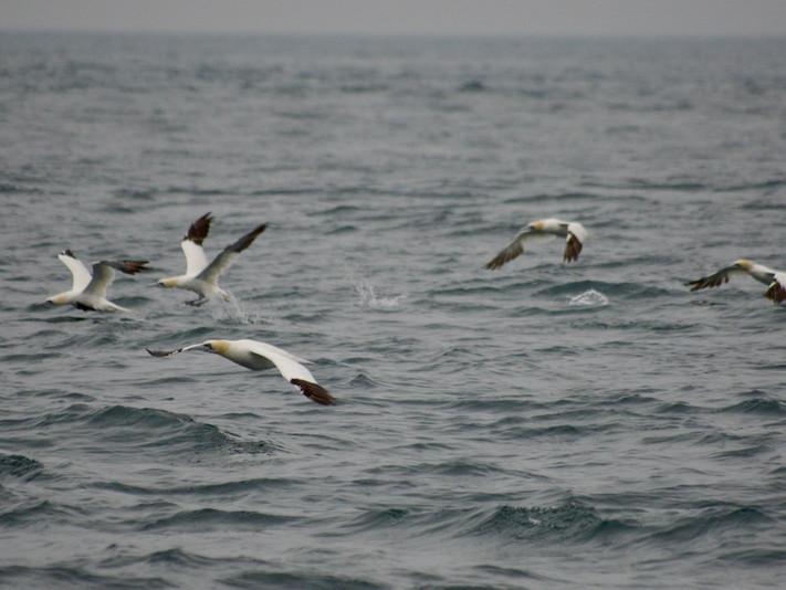 oiseaux-mer.jpeg