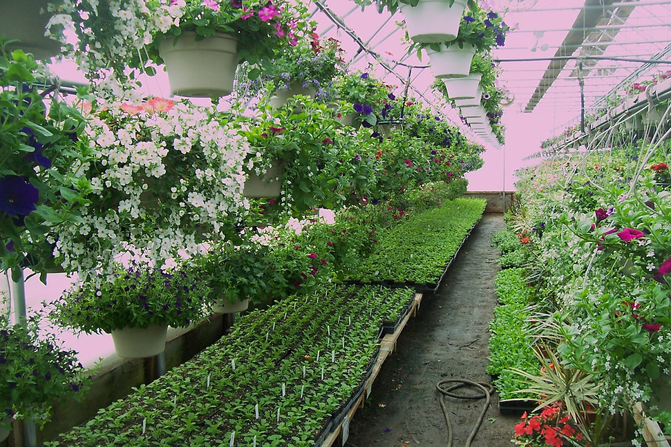greenhouse in Curtiss WI