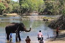 1024px-Dubare_Elephant_Camp_201803191249