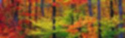 1600x1200-Nature-Autumn-1.jpg