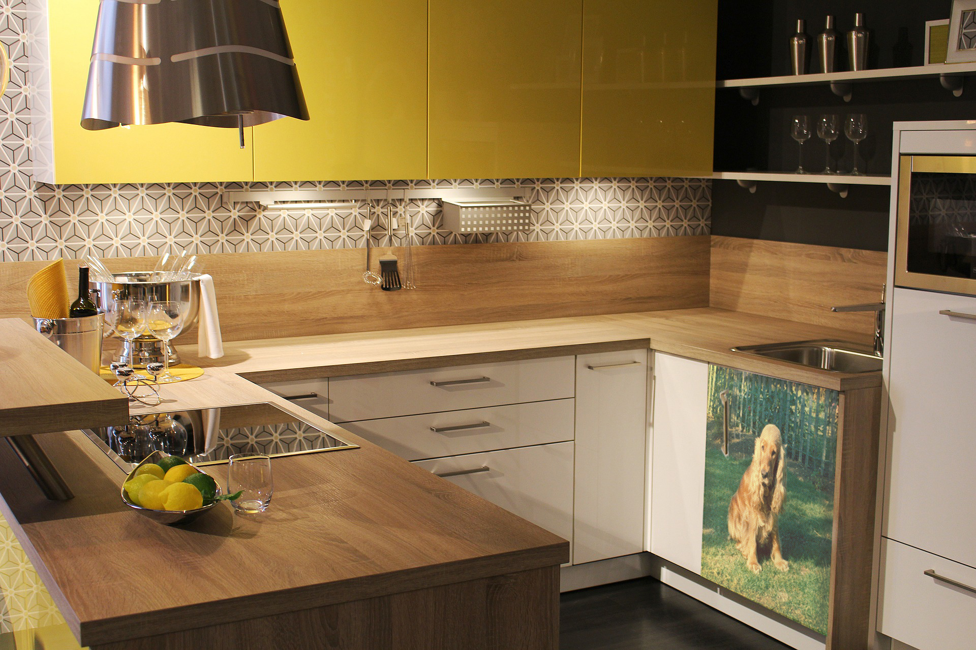 spaniel_kitchen-