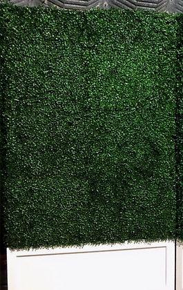 Boxwood Hedge Backdrop