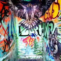 Graffiti Eagle