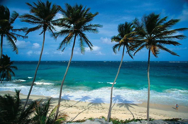 Palm-trees-ocean-Barbados.jpg