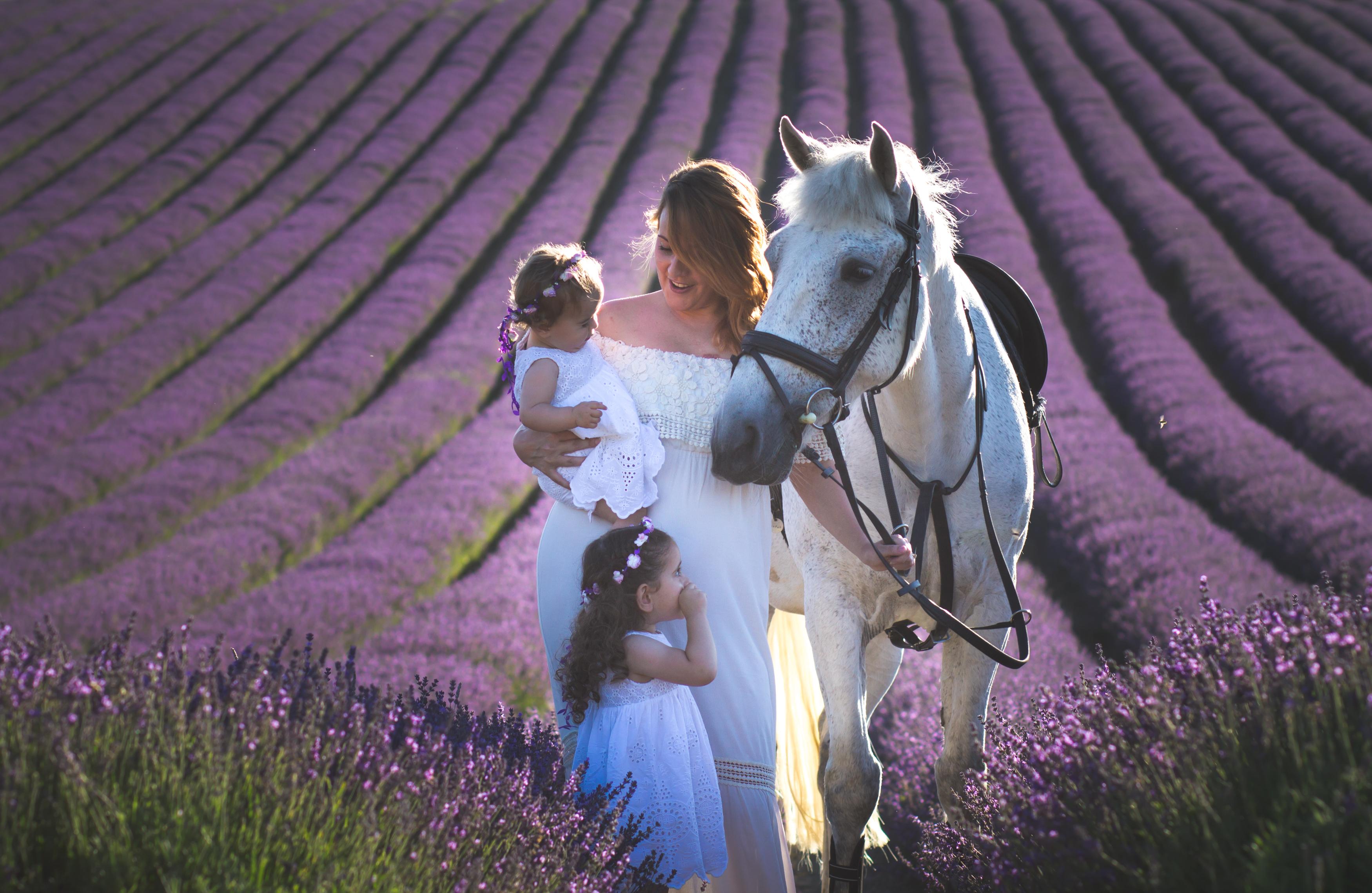Lordington Lavender